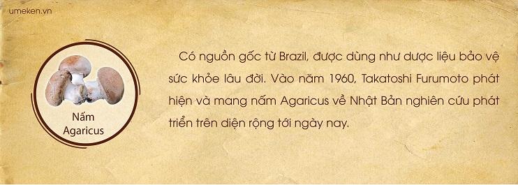 nam-argaricus
