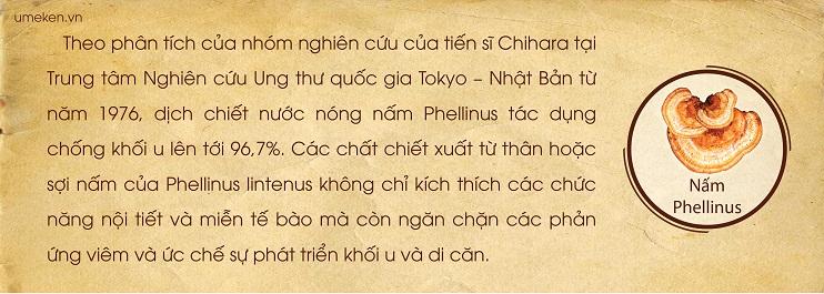 nam-phellinus